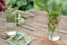Практическое садоводство - DIY garden ideas / Мастер-классы, полезные советы, сезонные работы по саду