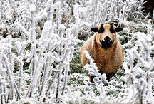 1 Stormy, Snowy, Icy / Photography / by Frau Katze