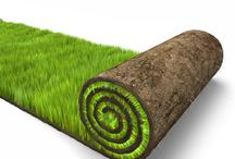 Lawn Tips / Tips on how to maintain and create the best lawn.