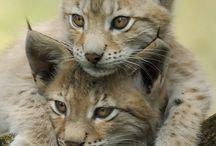los gatos molan
