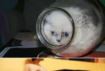 animals stuck in interesting places and fails