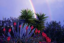 arcobaleni siciliana