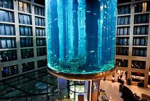 Aquarium   Pools
