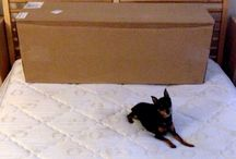 Unpacking a Memory Foam Mattress / by Zen Bedrooms