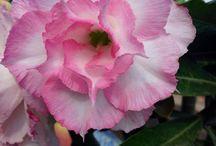 najpiękniejsze kwiaty