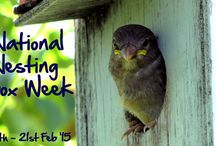 National Nest Boxing week