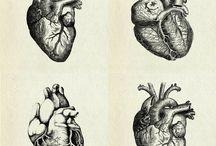 Anatomy / Anatomy