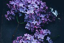 La-li-laa like lila