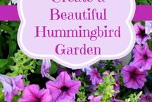Hummingbird garden / by Cookie Bumstead