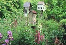 Garden/Yard / by Anne Baird