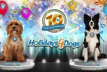 Holidays4Dogs Movies
