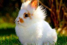 zajačik / huňatí zajko