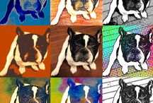 "Mr.Pancho ""LIFE IN JAPAN"" / French bulldog"