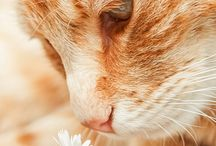cats =.=