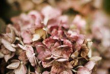 Bruin en rose / by Ria Vanderwaardt