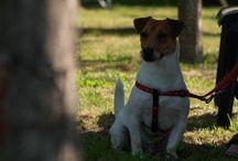 Festa del Cane / Festa del Cane - Trofeo Leo