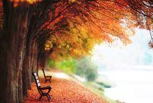 단풍 / 가을 풍경