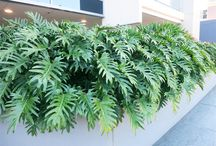 Ideas for Yundah Street / Garden design