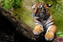 Animalphotography / Meine Tierfotografien :)