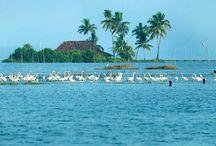 Kerala back water-India mirror Holidays