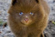 So Cute! / by Jen Beard