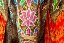 indicky slon