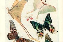 papillon affiche
