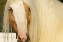 Divine Horses / This is some of the most beautiful horses that I like. Feel free to pin any that you want.