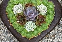 Succulent Design Ideas