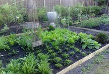 My Vegetable Garden / My first year having my own garden. Wish me luck!