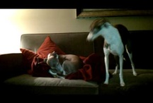Video-dogs-mania