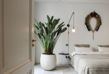 Indoor Plants and Greenery