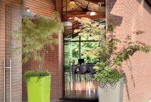 Brazil! / #flowers #plants #pot #design #madeinitaly