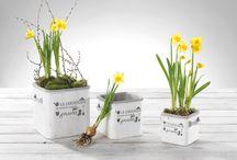 Garden / Nuovissima linea #vasi in comento da interno ed esterno. Spazio ai fiori, al verde, alla primavera!