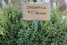 Wedding Greenery - Oregonia Boxwood