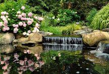 Ringwood Water Gardens