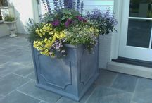 Seasonal Display / Seasonal planted pots and urns to brighten an entrance or tuck in the garden. Include bulbs in your planting beds for early or late season color.