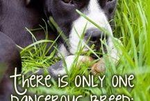 Dangerous breeds -  Humans