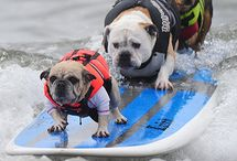 Athletic Pets / Running, jumping, swimming, skateboarding... these pets do it all! / by ASPCA Pet Health Insurance