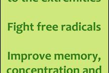 Ginkgo biloba - Jinan dvojlaločnatý / Blood flou, brain, cirkulation, memory, concentration, free radicals, varicose venis, tinnitus and vertio - péče o zdraví - Health benefits