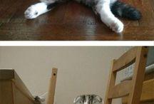 Cats sitting.