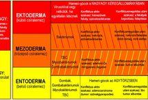 Germán medicina