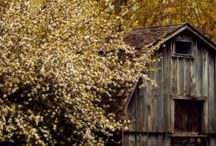 oLdE YeLLoW FaLL / by JeRrY