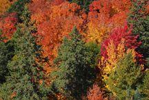 Panorámicas Canadá / Fotos panorámicas del viaje de dos meses por Canadá en setiembre/octubre de 2014 / by Vagamundos