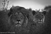 Bush / Wildlife