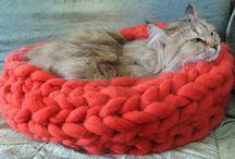 17 Şubat- Evimizin Bir Parçası Kedilerin Günü! / Bugün 17 Şubat Dünya Kedi Günü. Onlar enerjimizi alır pozitife çevirir. Evimizde, kucağımızda, kalbimizde, karşılıksız sevgileriyle heryerdedir.