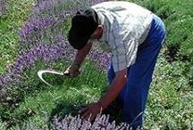 Gardening...