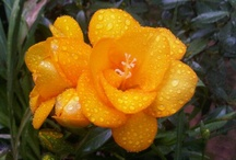 Flowers / by Sandra Medeiros
