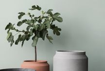Pots and Plants / indoors plants and design