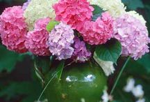 Hydrangeas (My favorite) / One of my favorite flowers.  They brighten up your spirit and add beauty to any room.   / by Theresa Hardy